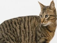 南京布偶貓舍 CFA注冊 專職繁育布偶貓 仙女貓