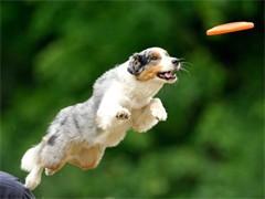 狗狗訓練學習訓犬技術 寄養