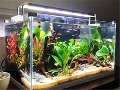 鱼缸清洗鱼缸搬运鱼缸维护鱼缸售后清洗鱼缸鱼病治疗