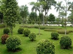 蚌埠锦上添花园艺-您身边的绿植养护专家