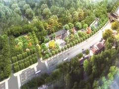 湘南苗圃丹桂、樟树、灌木、大树移栽、柳树等批发