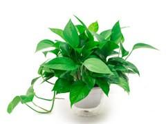 訂鮮花開業花籃配送康乃馨送花預訂鮮花店訂購花店綠植