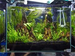 海水缸维护淡水水族箱维护,水草缸水陆缸超白鱼