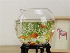 专业上门设计制作大型生态鱼缸,酒店海鲜池,生鲜店