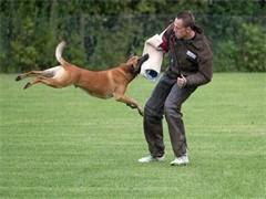 宠物训练狗狗训练学校 湖北武汉金牌宠物训练学校