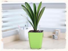 懷化辦公室植物盆栽出租公司