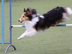 十堰宠物训练来金牌宠物训练学校办学12年