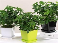 漳州办公室植物盆栽租摆公司