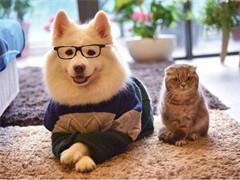 威海哆来宠物为您提供专业的宠物寄养服务