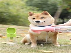 八成新宠物吹水机