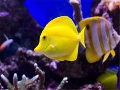 反游猫观赏鱼热带鱼