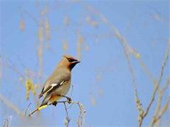 大型珍禽养殖场,长期出售自家繁殖鸵鸟