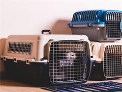 漳州宠物猫咪运输