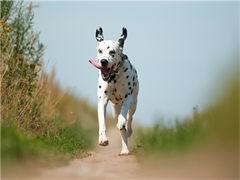 十堰知名养殖基地常年出售 雪瑞纳幼犬 签协议可上门挑选