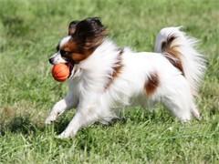 金牌宠物训练学校武汉专业训练狗狗