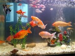 魚缸清洗維護魚缸凈水改造魚缸保養搬家