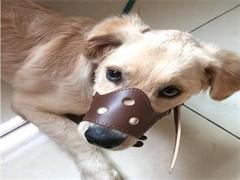泰迪宠物用品齐全