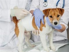 宠物防疫 疾病诊疗