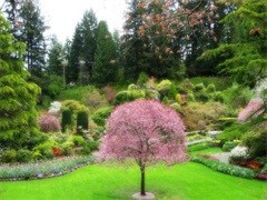 提供庭院绿化服务