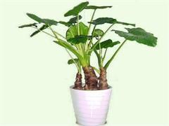 懷化辦公室綠植盆栽租擺公司