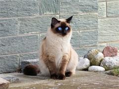 想要领养一只白色的小猫咪