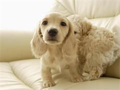 狗模狗样宠物馆 宠物寄养服务