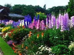 新太阳园艺专业花卉绿植租赁 品种繁多 自产自销