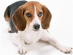 来客犬舍招聘宠物美容师助理