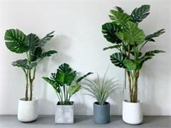 蚌埠办公室植物盆栽租赁公司