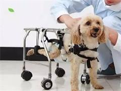 寵物看病就去臨平的澤泰寵物醫院