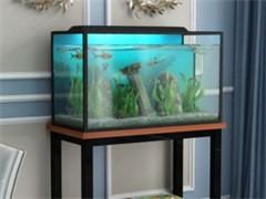低價轉讓魚缸設備一套