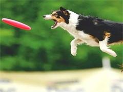 杭州江干寵物專業訓練師培訓