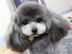 小Q宠物,Ngkc专业认证美容师,给你爱宠万千宠爱