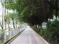 112亩桂花林场转让租凭使用权33年