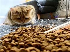 转手猫零食 猫咪爱