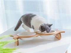 猫砂盆爱丽丝全新没用过
