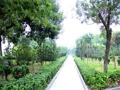 杭州江干專業租花 盆栽批發銷售 綠化養護 誠信經營