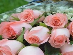 5月14母亲节大量批发零售单支康乃馨高档礼盒-花束