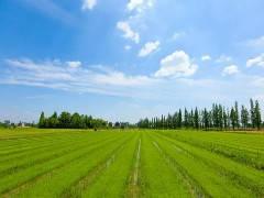 農村致富好項目種兔養殖雜交野兔散養技術