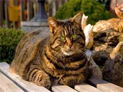 蕪湖貓舍專業出售各類純種幼貓