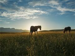 成都里可以騎馬 成都騎馬培訓教學的地方