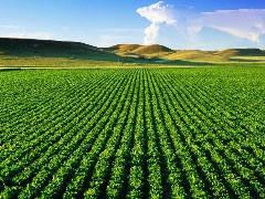 生態養生農場和私家花園農場 民宿