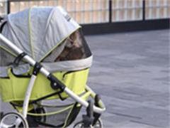 小太陽雙方向嬰兒手推車