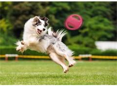武汉好的宠物训练金牌宠物训练学校