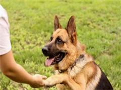 狗狗不聽話就找成都家寶寵物學校 規模大正規有信用
