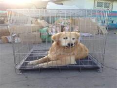 國內國際寵物托運公司 喀什專業寵物托運服務 誠信靠譜