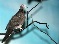 黄石专业养殖鸵鸟基地 大型特种养殖中心