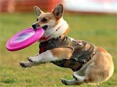 长沙守望者宠物训练俱乐部