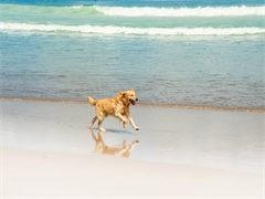 CKU注册犬舍 各品种萌犬全国均可发货 可视频看狗