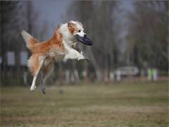 湖北地区专业宠物训练